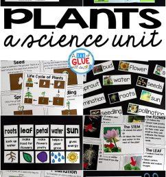 Plants Unit (PowerPoint [ 2048 x 1238 Pixel ]