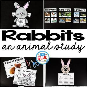 Rabbit Facts : An Animal Study
