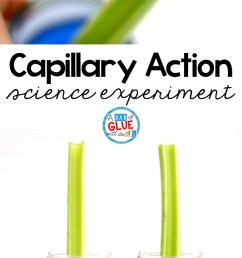 Celery Science Experiment - [ 1356 x 740 Pixel ]
