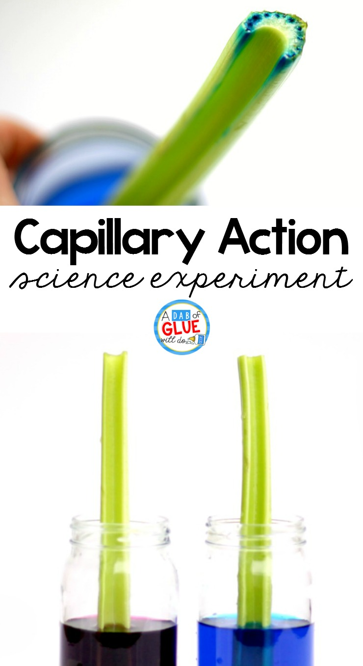 medium resolution of Celery Science Experiment -
