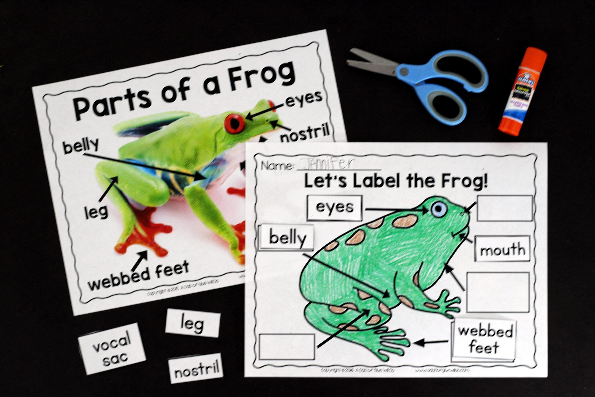 Label Frog Parts Worksheet