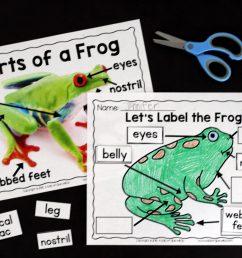 Frogs: An Animal Study - [ 1365 x 2048 Pixel ]