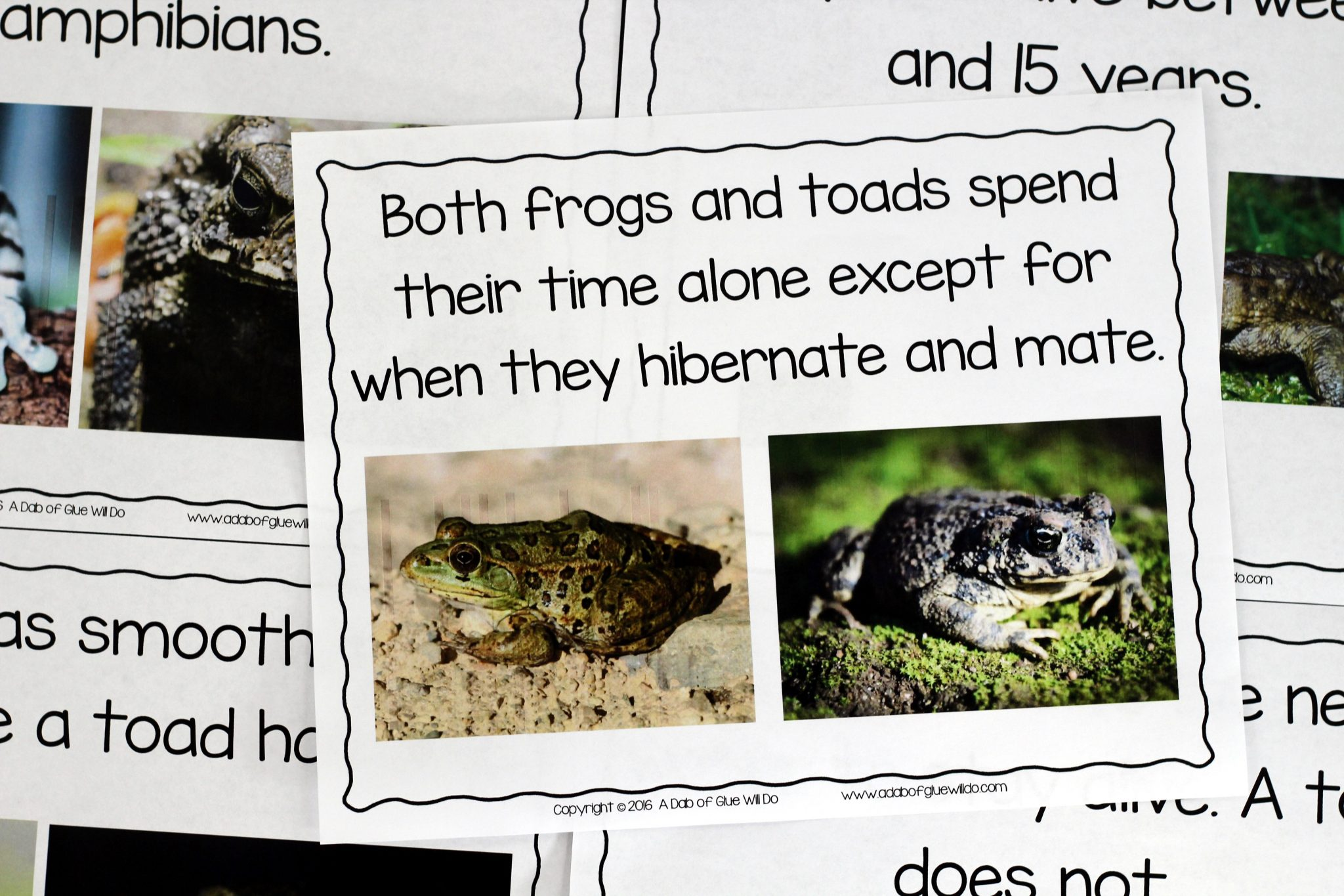 frog and toad venn diagram single phase submersible motor starter wiring explanation frogs an animal study