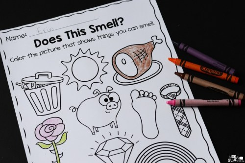 small resolution of Five Senses Science Unit Hands-on Learning Activity
