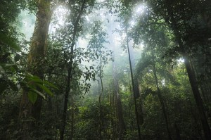 Tropical forest, with sunbeams