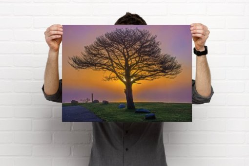A single tree silhouetted by a purple and gold sunset.