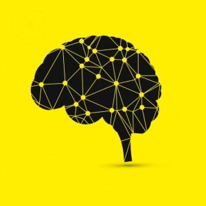 cerebro de adams