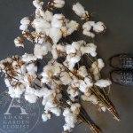 Fluffy Cotton Bunches Gold Coast Adam S Garden Florist
