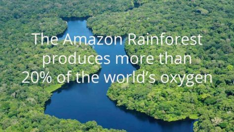 Image result for save the rainforest