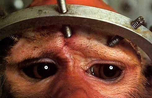 """Click here to visit Occupy for Animals, then click """"Research"""" at the top for more information, as well as gruesome images and video"""