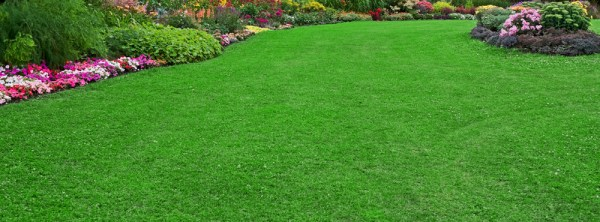 5 steps perfect lawn - vokes