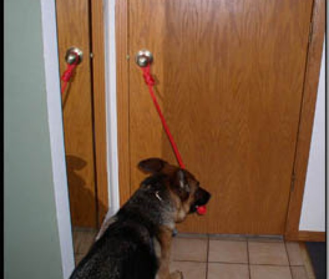 I Have The Dog In The Room To See That I Am Attaching The Open Command Training Rope To The Object I Have Treats Concealed In My Left Hand