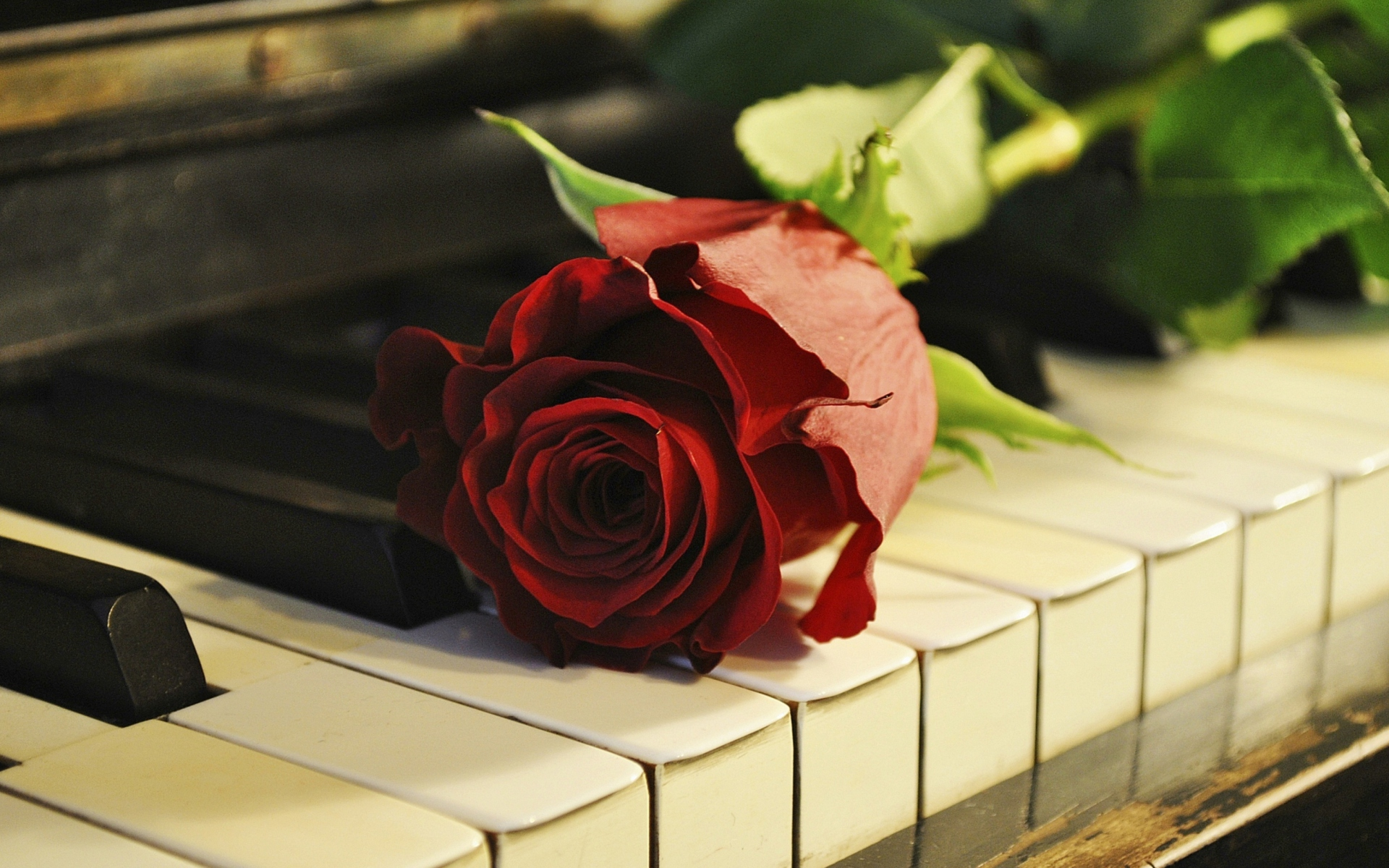 Rose-On-Piano-1920x1200
