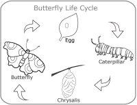 May Preschool Curriculum, Caterpillar, Butterfly, Mother's