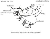 Bug Theme For Preschool *** Curriculum Lesson Plans About Bugs