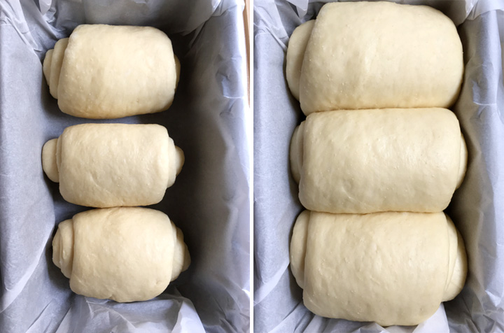 Bread dough rolls in a loaf pan, before and after rising time