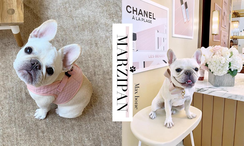狗界 KOL :這隻可愛法鬥犬,可是狗狗衣飾的品牌大使 ‧ A Day Magazine