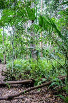 wyspa_zanzibar_atrakcje_jozani_forest