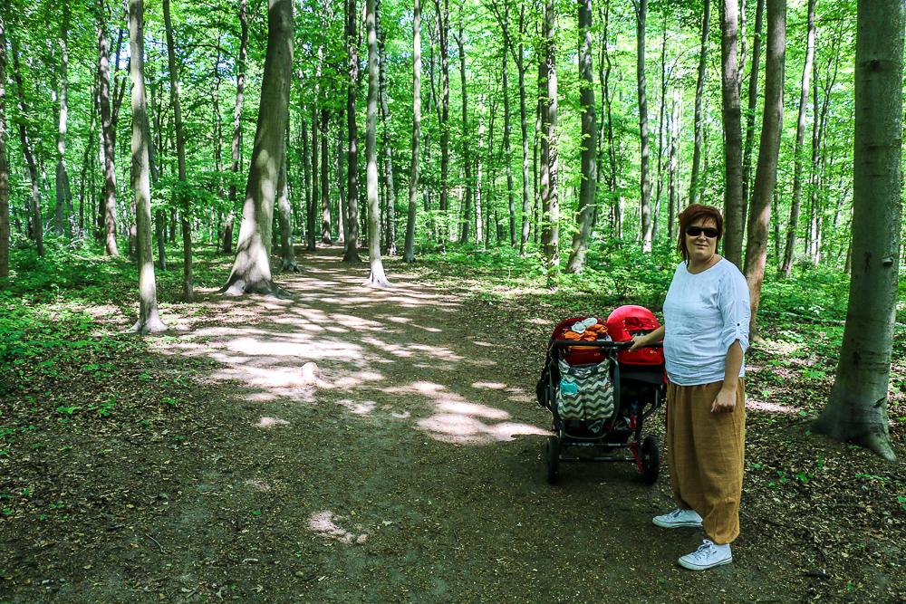 ścieżka w koronach drzew w Poznaniu