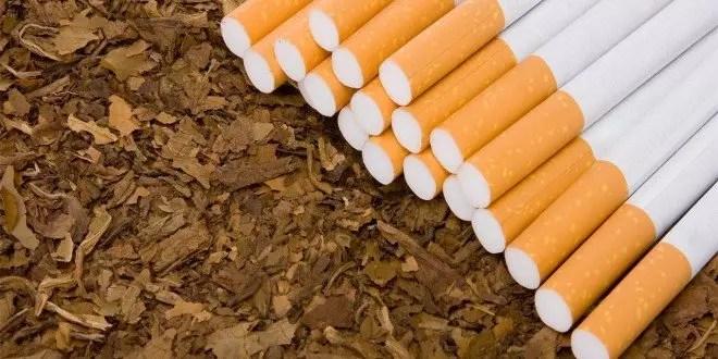 التبغ وتأثيراته المدمرة من الفم إلى القدم