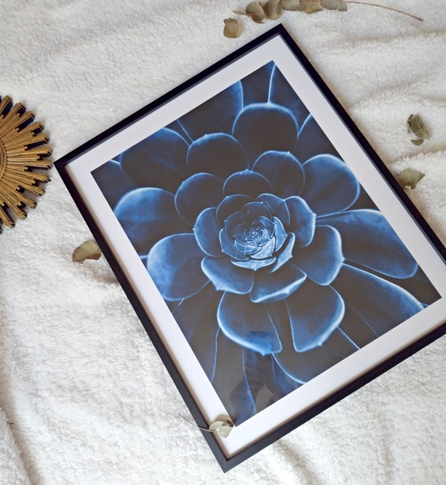 blue flower cactus poster store