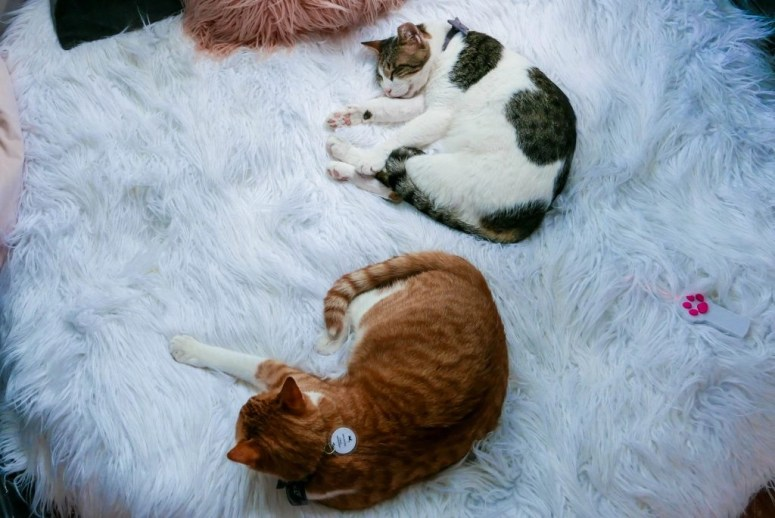 Charlie Crumbs and Whiskers Cat Cafe Georgetown