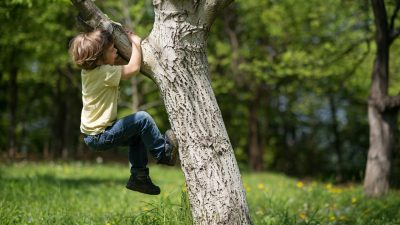 Little boy climbing a tree.