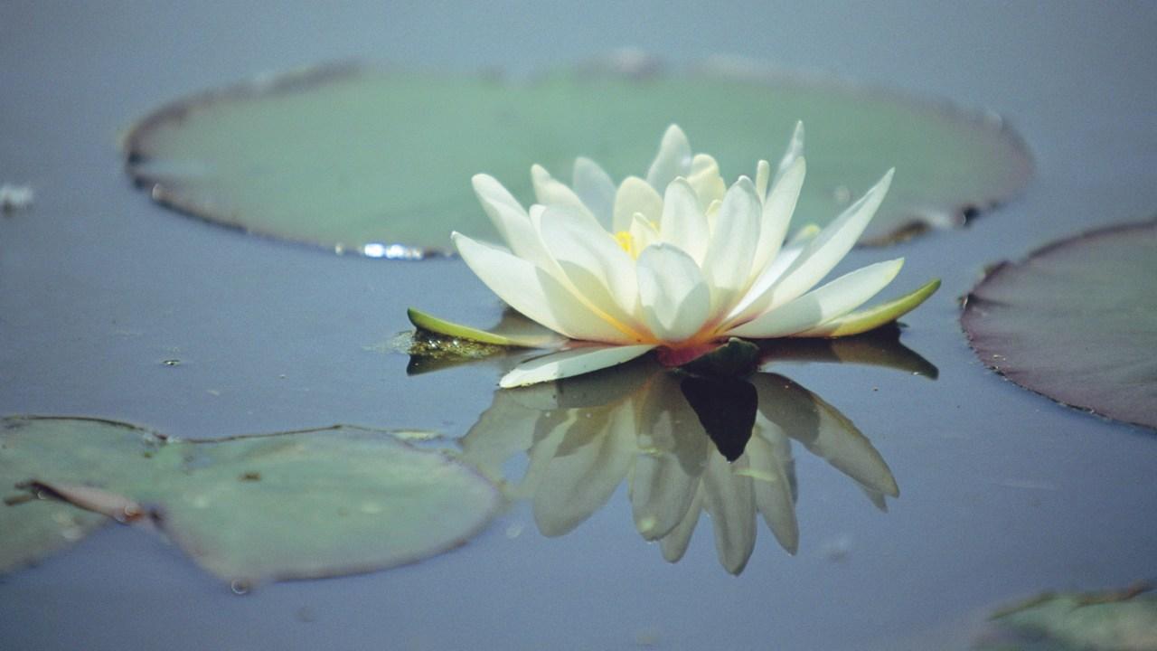 Meditating to manage ADHD symptoms