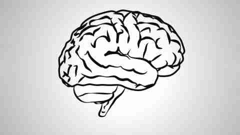 ADHD brain