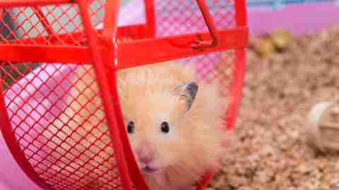 A hampster on a wheel - a metaphor for what ADHD feels like
