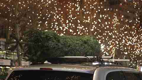 Holiday Mishaps: Tree on Car Roof