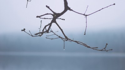 Wet branch and being stripped by shame