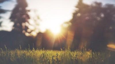 Think Positive: Grass & Sunlight