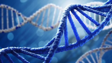More Than Just Genes: How Environment, Lifestyle, and Stress Impact ADHD