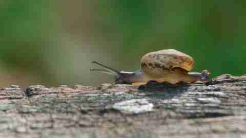 A snail crawls slowly on a log, a metaphor for taking it slow to stop anxiety