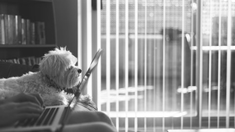 On bad days, ADHD can make you feel like just hiding out inside your own apartment with your dog.