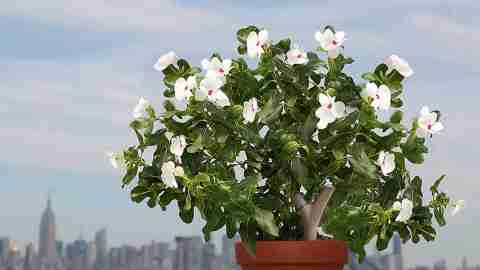 Parrot Flower Power solves the ADHD problem of forgetting to water your plants