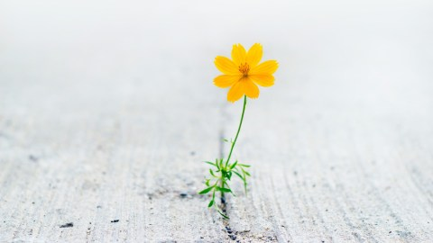 A flower growing out of concrete, representing the resilience that is a sign of adult ADHD