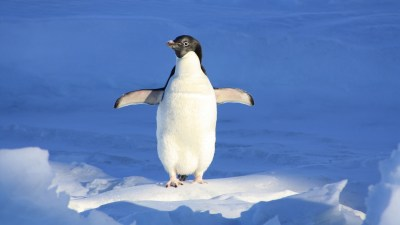 Like a penguin wishing to fly, I wanted things my ADHD brain couldn't do...until I learned to look on the bright side.
