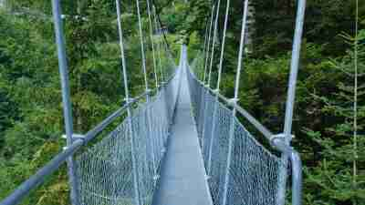 suspension bridge in the woods