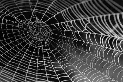 spiders web of ADHD and PTSD