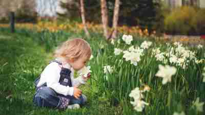 Child smells spring daffodil flower