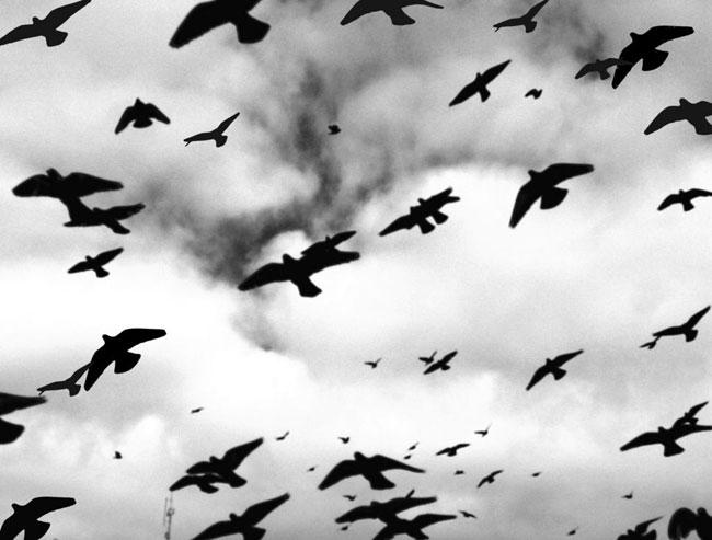 02-bandada-palomas.jpg