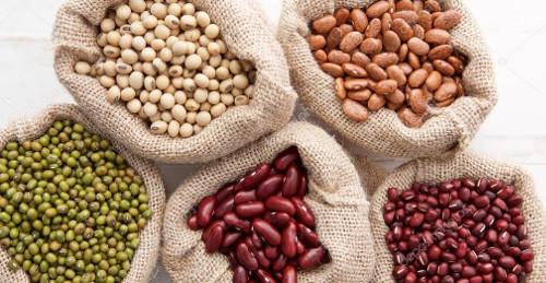 Potencia centro de investigación camagüeyano la producción de semillas de frijol