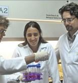 ARGENTINA. El virus del dengue muta cuando pasa del mosquito al humano 3