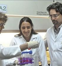 ARGENTINA. El virus del dengue muta cuando pasa del mosquito al humano 1