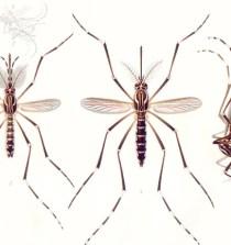 BRASIL. Un estudio indica que el virus de Zika es cada vez más eficiente al infectar humanos 9