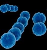 Descrito un nuevo mecanismo implicado en la transferencia de resistencia a los antibióticos 6