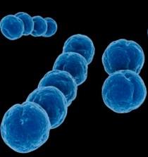 Descrito un nuevo mecanismo implicado en la transferencia de resistencia a los antibióticos 4