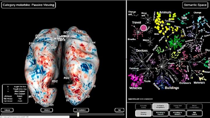"""""""Un cerebro lateralizado tiene más ventajas individuales y sociales"""" 1"""